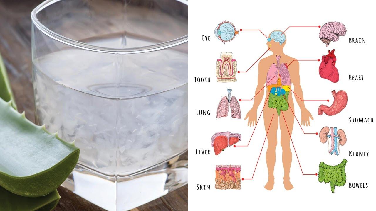 aloe vera ou babosa 8 benef cios do suco de aloe vera para o seu corpo. Black Bedroom Furniture Sets. Home Design Ideas